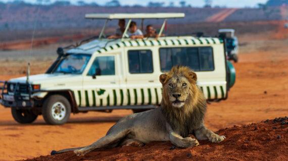 Kenia Safari Leon