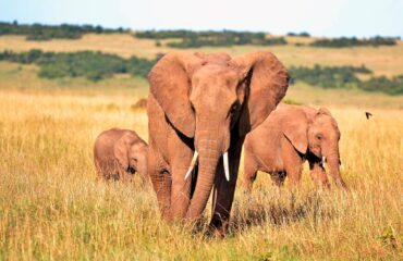 Kenya - Elefantes