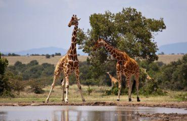 Samburu - Kenia