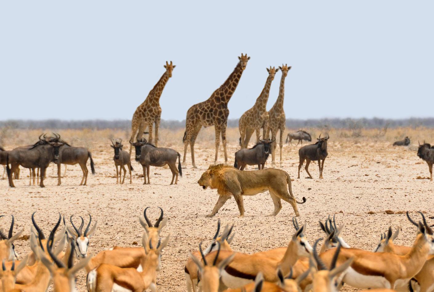 Animales salvajes en Namibia, África