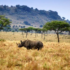 Rinoceronte en el Parque NAcional Maasai Mara