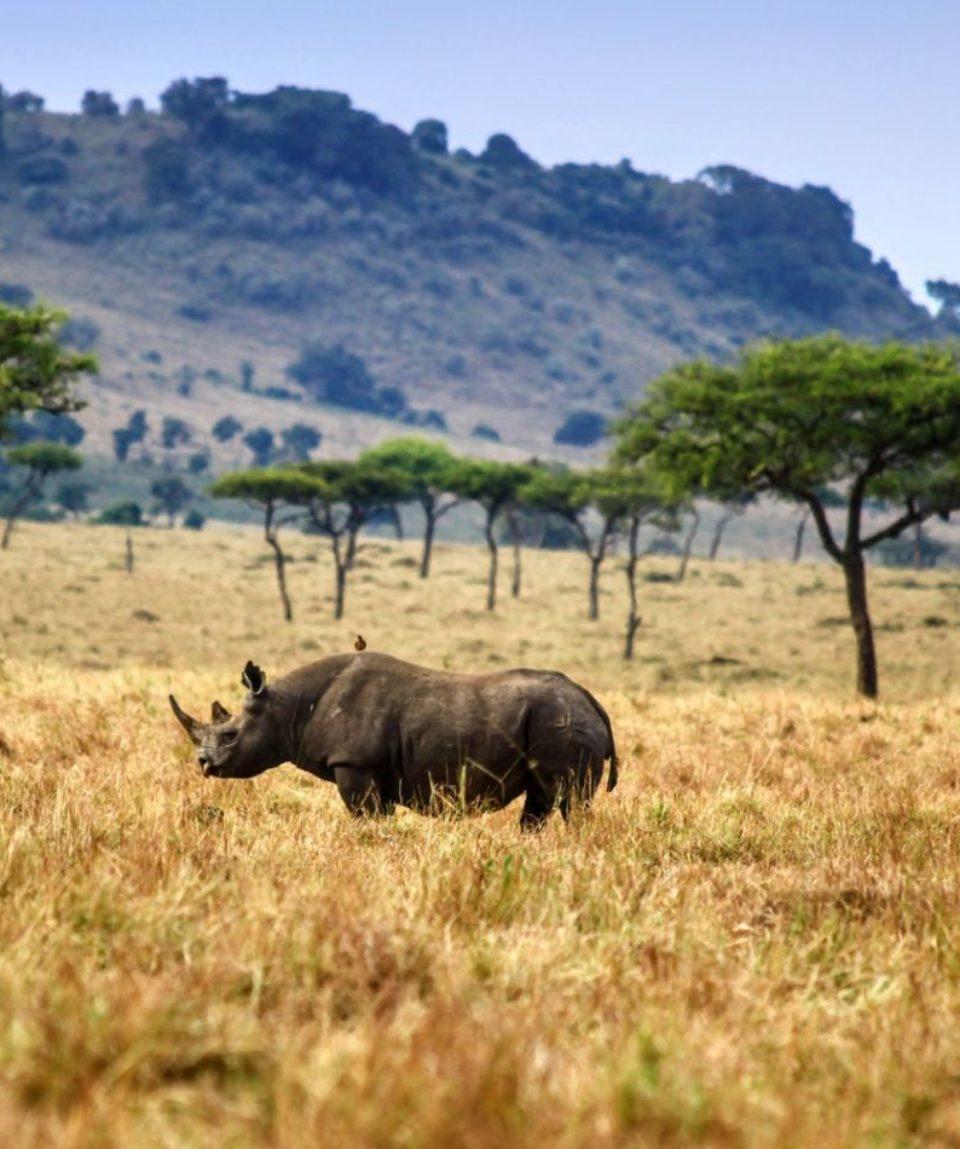 Esenciales para un safari en África