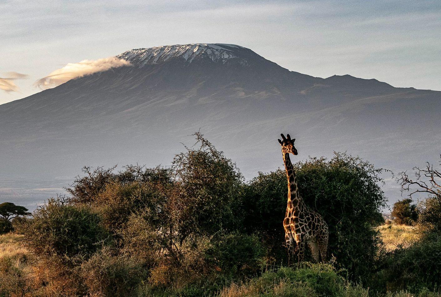 Vistas del Kilimanjaro, Tanzania