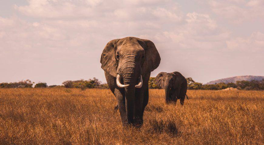 Los mejores safaris de África para cualquier viajero