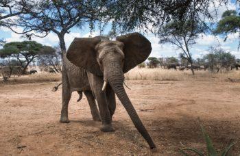 Consejos para un inolvidable Safari en Sudáfrica