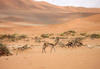 Los 10 mejores lugares que debes visitar en Namibia
