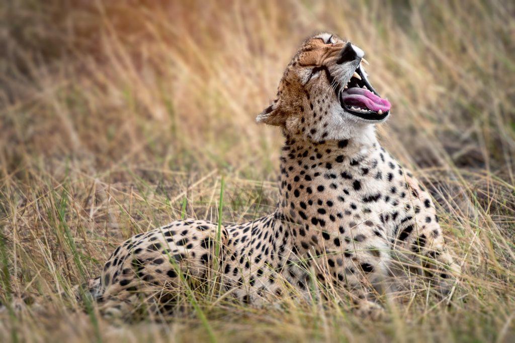 Parque Nacional del Serengueti y el Cráter Ngorongoro, Tanzania