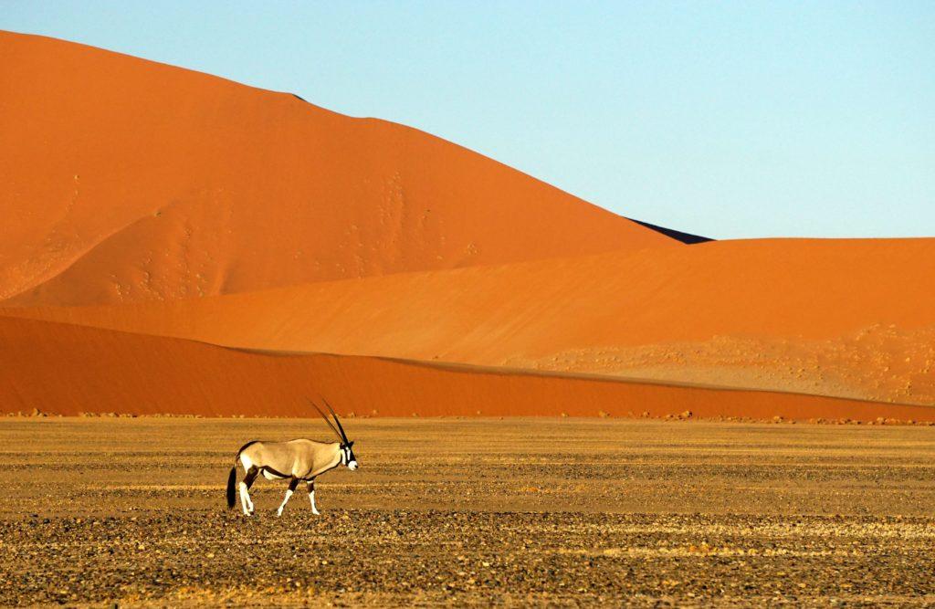 El Parque Nacional Namib-Naukluft