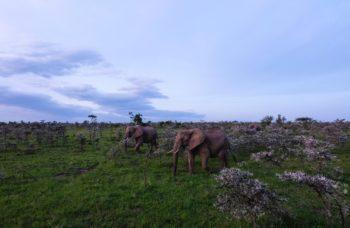 ¿Por qué elegir visitar el Parque Nacional Masai Mara?