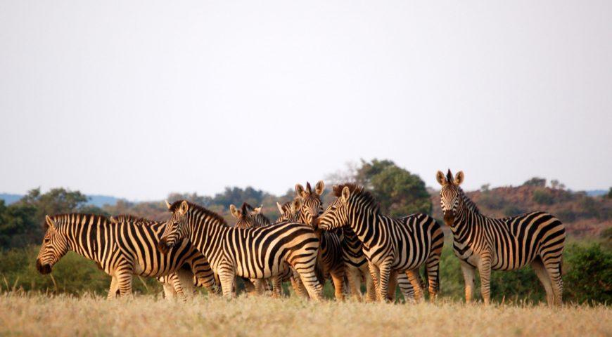 ¿Por qué ir a Botswana?