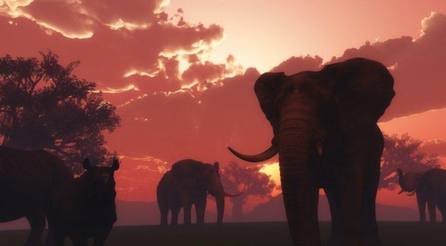 África: animales en peligro de extinción