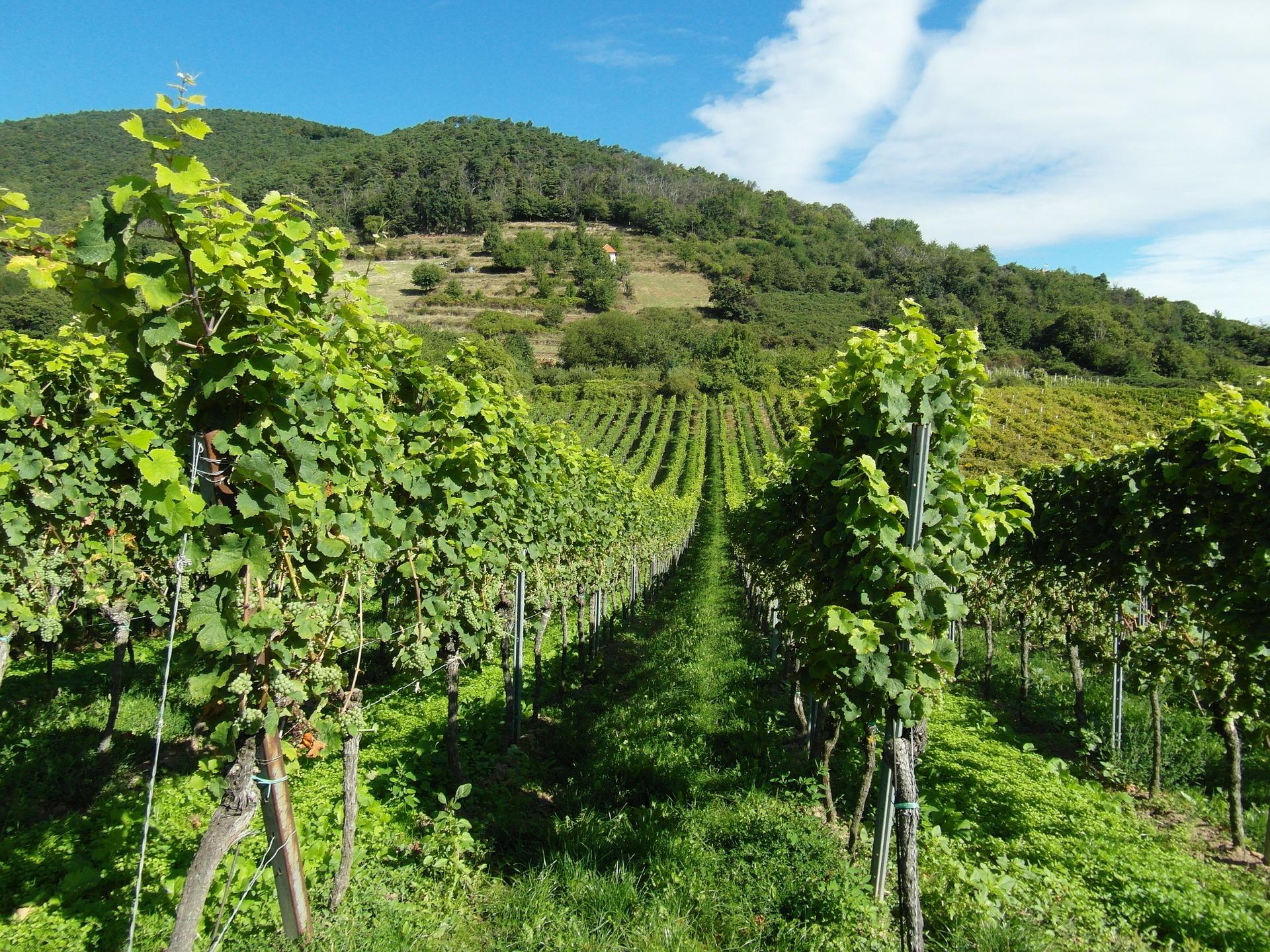 Vista Waterkloof Wine Estate, Ciudad del Cabo