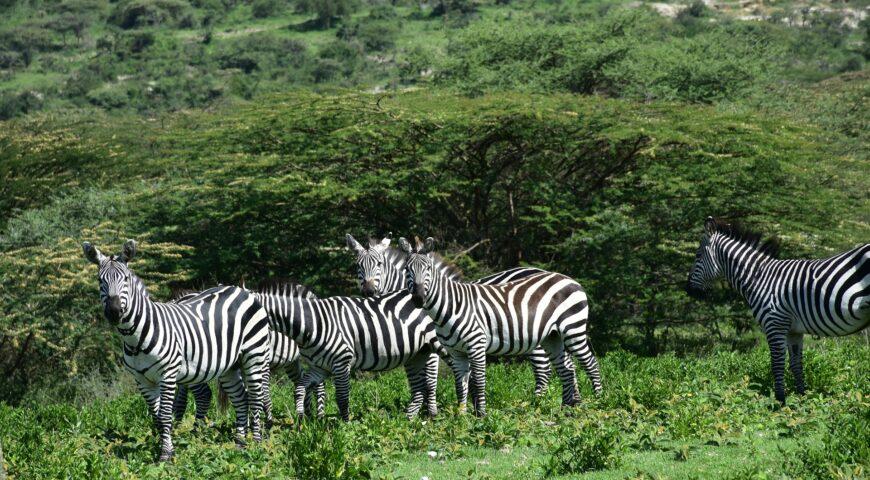 11 razones por las que debes visitar Tanzania