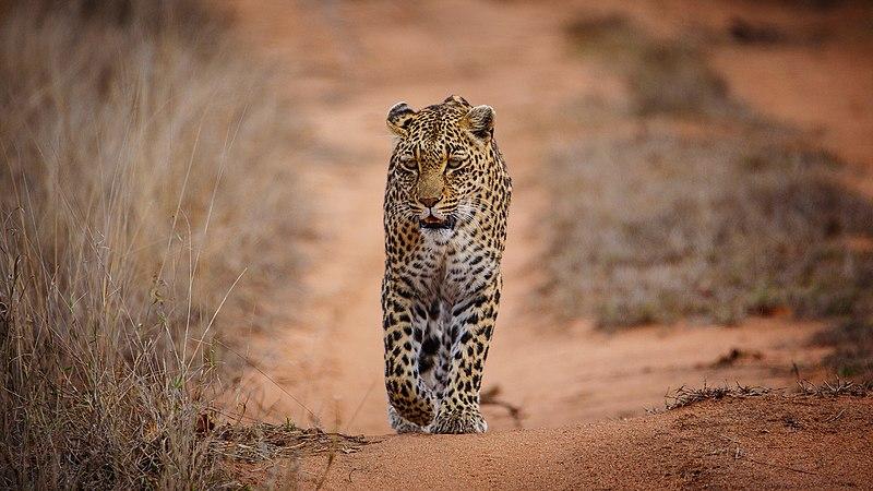 Reserva Lion Sands en el Parque Nacional Kruger