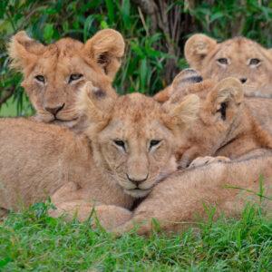Kenia familias