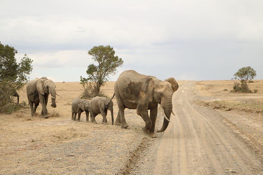 Parque de elefantes de Addo (Cabo Oriental)