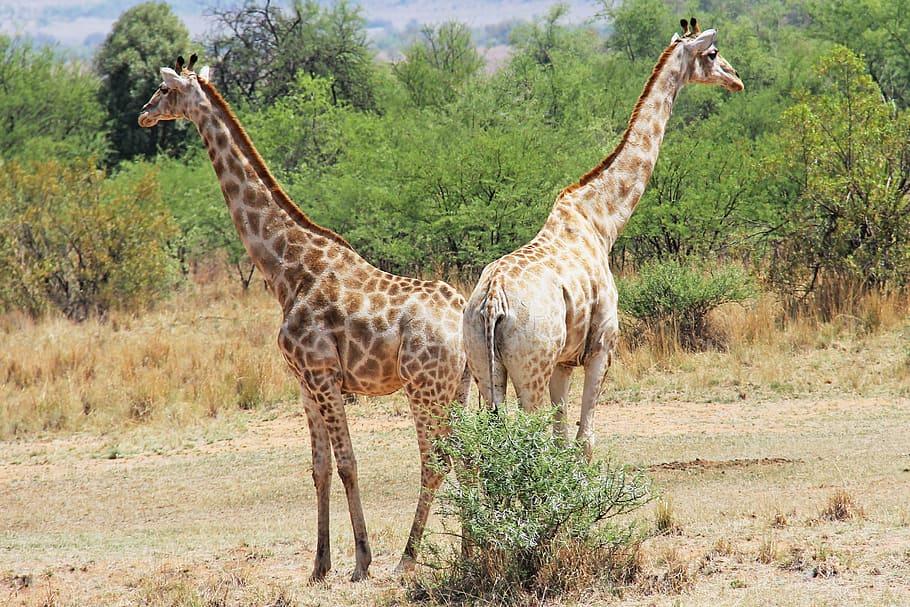 Reserva de caza Pilanesberg