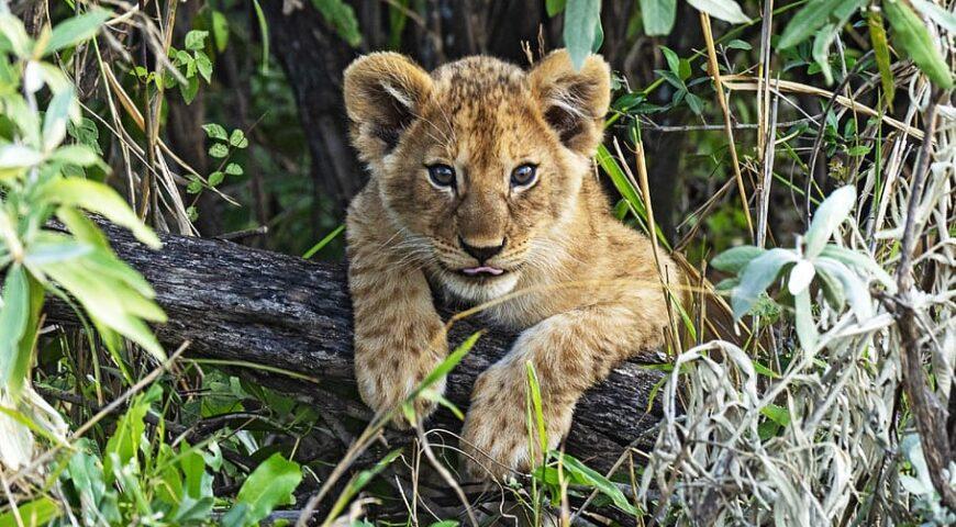 Las mejores reservas de safari y caza en Sudáfrica