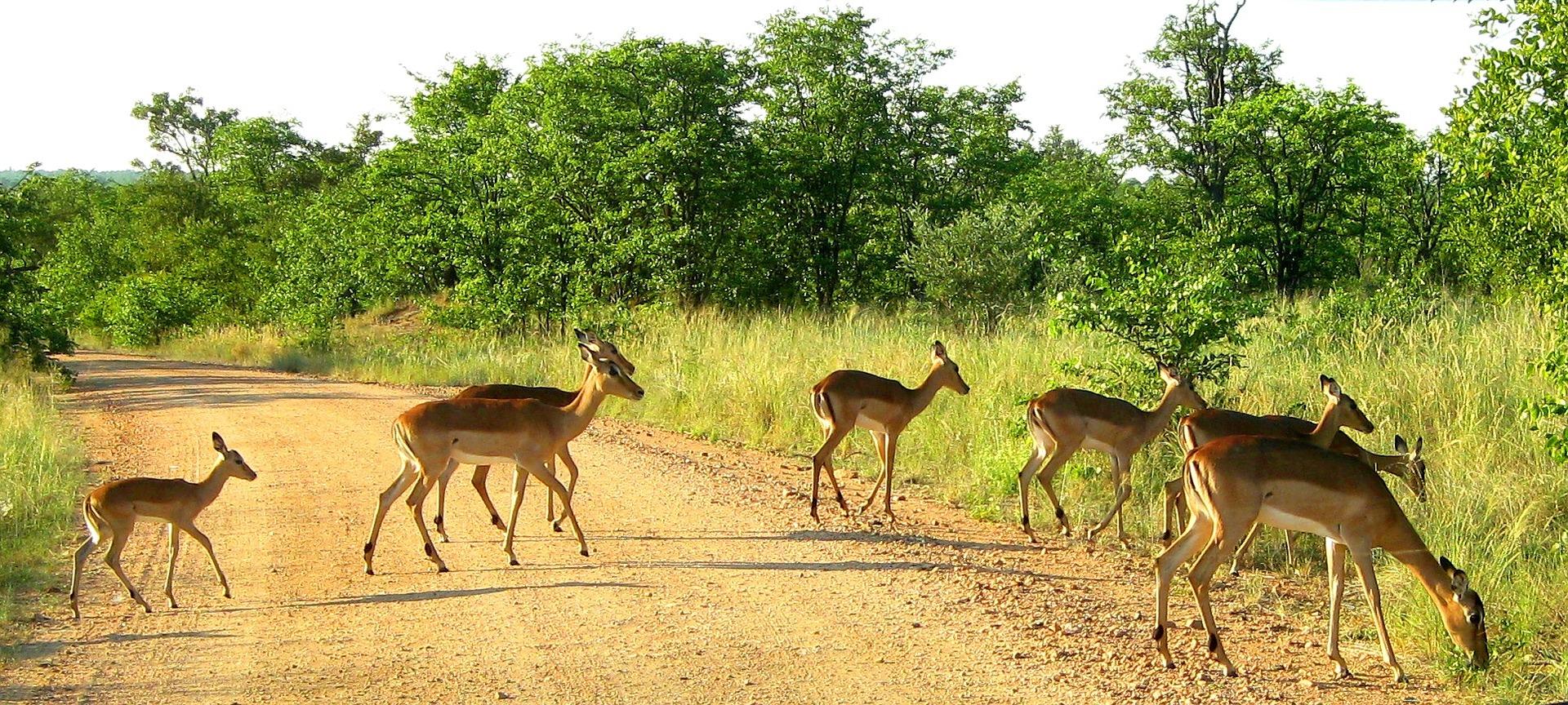 El Parque Nacional Kruger (provincias de Mpumalanga y Limpopo)