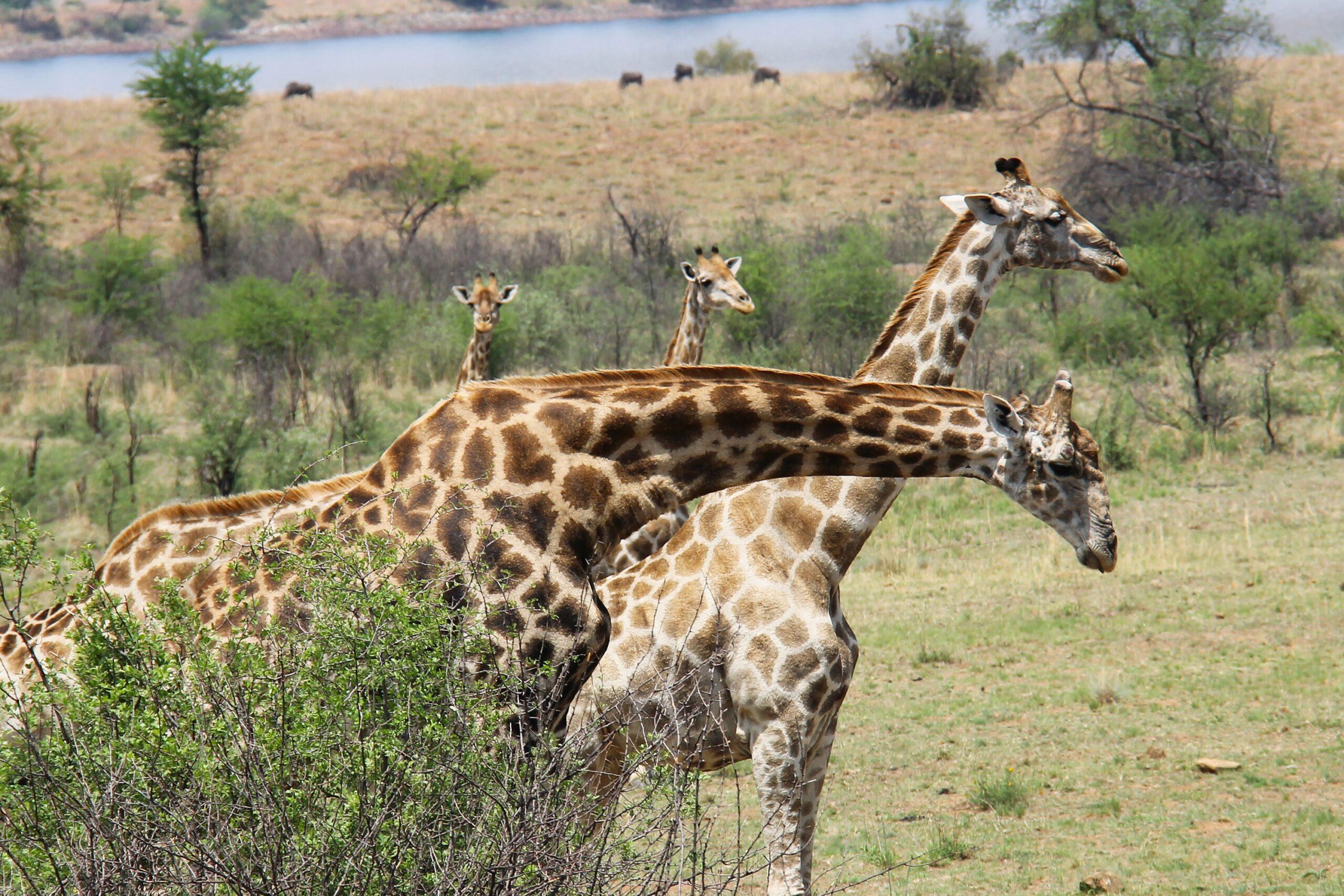 Reserva de caza Madikwe