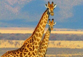 13 cosas geniales para hacer en Sudáfrica