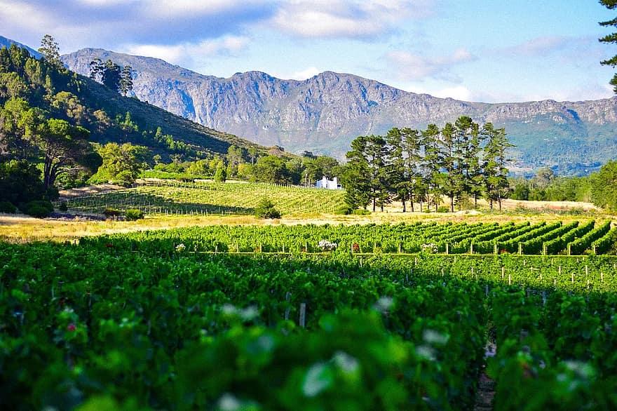 Ruta de cata de vinos